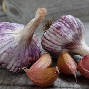 Shandong TURBAN 146 Garlic Bulb
