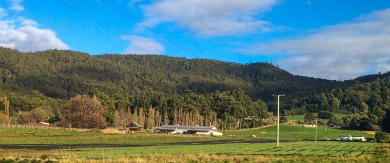 Tasmanian Gourmet Garlic Shed, Middleton Tasmania
