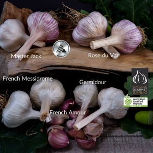 FRENCH SEASONAL COMBO PACK - 8 BULBS