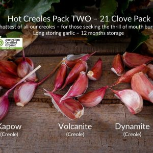CREOLE PACK - HOT CREOLES PACK 2
