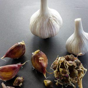 Perhonnen Kahdesta (True Garlic Seed Progeny Hybrid SPS & MPS)