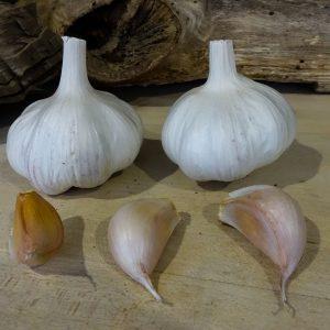 Gossimer - White (Turban)