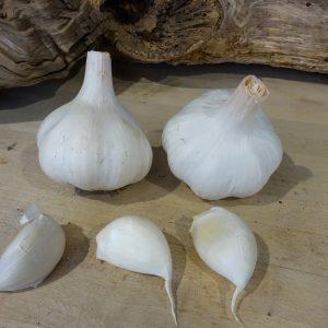 White Velvet (Turban)