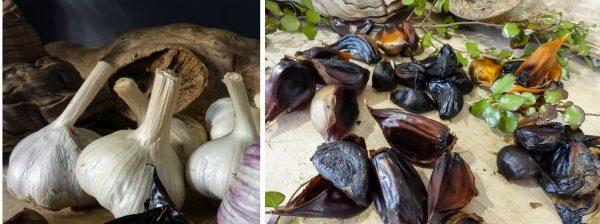Culinary-Pack3-2 Bulbs & Sample Black Garlic