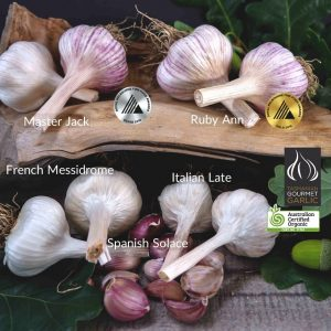European 8 Bulb Seed Pack - Medal Winner