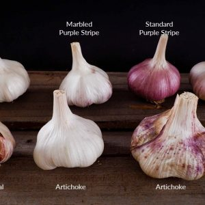 Garlic Groups - Bulbs