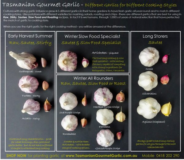 Match your Garlic to your Cooking StyleV3