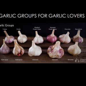 WEBINAR RECORDING - GARLIC GROUPS FOR GARLIC LOVERS
